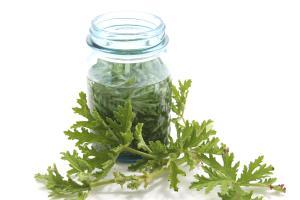 geranium-oil-infusion